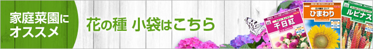 花の種小袋
