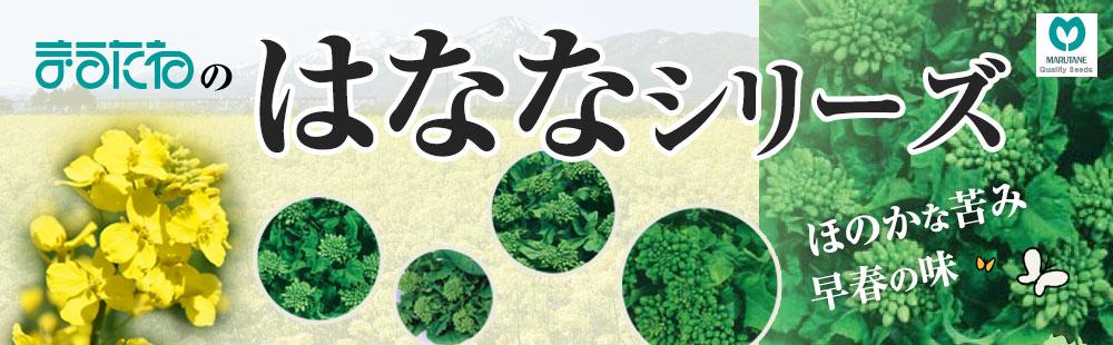 丸種の花菜